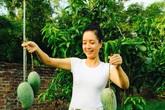 Vườn cây rộng bát ngát và sai trĩu quả của diễn viên Chiều Xuân