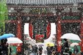 Tokyo lần đầu có tuyết giữa tháng 11 trong hơn nửa thế kỷ