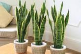 Top 9 cây cảnh lọc không khí nên trồng trong nhà