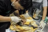 Cứu hộ 61 cá thể Tê Tê tại Thái Bình