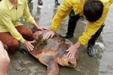 Từ chối hàng trăm triệu, ngư dân thả rùa quý hiếm xuống biển