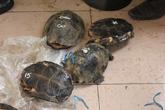 Tê tê, rùa quý hiếm được ngụy trang trong xe Carmry