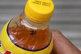 Vụ chai nước Number One có ruồi ở Nghệ An: Các nhà khoa học nói gì?