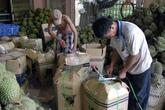 Sầu riêng bất ngờ tăng vọt, nông dân thu lợi bạc tỷ