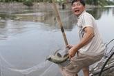 Người dân cất vó bắt cá sông Tô Lịch sau bão