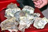 Tên trộm làm biến dạng hơn 50 triệu đồng trong két sắt