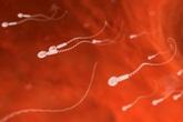Kỳ tích tạo ra tinh trùng từ tế bào da