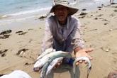 """Tour du lịch """"Cá – Thép"""" Formosa bị phản ứng kịch liệt"""