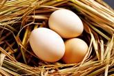 Trẻ em một tuần ăn mấy quả trứng gà?