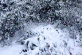 Ngắm tuyết phủ trắng miền Tây xứ Nghệ