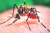 Người đàn ông Đài Loan nhiễm Zika sau khi dự đám cưới con trai tại Việt Nam