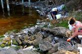 Quy trình thu gom hàng nghìn con cá chết ở bang Florida