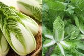 Chi tiết cách trồng rau cải thảo trong thùng xốp lớn nhanh như thổi, ăn suốt mùa đông