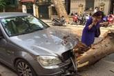 Hà Nội: Cây cổ thụ đổ trúng xế hộp Mecerdes, nữ tài xế thoát chết trong gang tấc