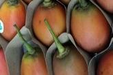 Cà chua lạ tiền triệu mỗi kg gây xôn xao Hà Thành