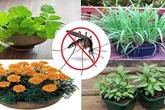 """Trồng 6 loại cây trong nhà đảm bảo lũ muỗi không dám """"bén mảng"""" đén cửa"""