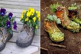 Trồng hoa trong giày dép cũ bỏ đi: Tưởng không hay mà hay không tưởng