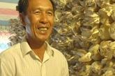 Vỏn vẹn 150m2 trồng nấm, thu 40 triệu/tháng