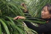 """Khổ công trồng loài hoa lan """"đỏng đảnh"""", chỉ lãi hơn 200 trăm triệu/năm"""