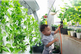 Ban công rau sạch chỉ 3.6m² đầy ắp kỷ niệm trồng rau dở khóc, dở cười của ông bố 9x