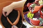"""Không cần mua chậu mới, vẫn trồng được cả """"vườn cây cảnh mini"""" tuyệt đẹp từ mảnh chậu vỡ"""