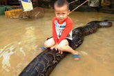 Bé trai cưỡi trăn khủng tại Thanh Hóa, xử phạt hộ nuôi trăn 3 triệu đồng