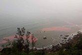"""Dải nước màu đỏ """"bí ẩn"""" liên tục xuất hiện ở vùng biển Thừa Thiên - Huế"""