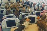 Chuyên cơ, bệnh viện dành riêng cho chim quý nhà đại gia