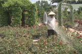 Vườn cảnh 70 tỷ tuyệt đẹp của lão nông Đồng Tháp