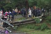 Cột điện gãy đổ khiến 1 giáo viên tử vong, 2 cháu bé nguy kịch