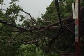 Bão số 10 đổ bộ: Người chết, cây đổ, thủy điện xả lũ