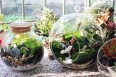Thú chơi trồng cây mini trong bình thủy tinh giúp chủ nhân kiếm 40 triệu đồng/tháng