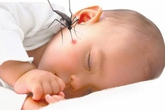 Cách nhận biết sớm trẻ sốt xuất huyết