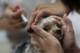 56 người chết vì chó dại cắn, gấp đôi số ca tử vong vì sốt xuất huyết