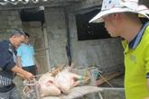 Chủ trại lợn kêu cứu, người tiêu dùng vẫn thiệt