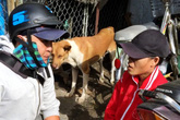 Hiệp sỹ săn bắt cướp Sài Gòn: Gọi hiệp sỹ làm chi cho ngại!