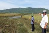 Huyện Nông Cống (Thanh Hóa): Dân nghèo mòn mỏi  chờ tiền hỗ trợ lúa ngập úng