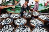 Hải sản ở 4 tỉnh miền Trung đã hoàn toàn an toàn