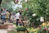 Lễ hội hoa hồng Bulgaria: Đơn vị cung cấp hoa cũng thất vọng