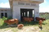 Dân khát bên công trình nước sạch tiền tỷ bỏ hoang