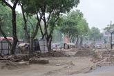 Hà Nội sẽ trồng cây gì khi di dời, chặt hạ 1.300 cây xanh?