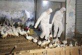 Khả năng dịch cúm A/H7N9 từ Trung Quốc xâm nhập Việt Nam rất cao