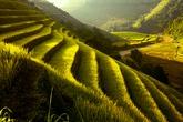 Ngẩn ngơ trước vẻ đẹp sóng ruộng bậc thang mùa lúa chín