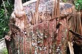 Nghệ An: Bắt hai cán bộ Ban quản lí bảo vệ rừng phòng hộ