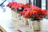 Những loài hoa rước lộc về nhà mà có thể bạn chưa biết