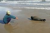 """Chú hải cẩu bị đánh chết ở Bình Thuận: Đáng sợ bản năng """"hoang dã"""" của con người"""