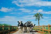 Vinamilk là đại diện duy nhất của Việt Nam vào top 10 doanh nghiệp xuất sắc nhất châu Á