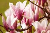 Cuối cùng chúng ta cũng biết được hình dáng của bông hoa đầu tiên xuất hiện trên Trái đất