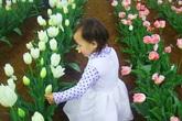 Đã mắt với khu nhà vườn hơn 500m2 ngập tràn rau xanh và sắc hoa của mẹ Việt ở Úc