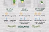 """12 loại cây cảnh đặc biệt sống tốt nếu để trong nhà và """"bí kíp"""" chăm sóc từ A đến Z"""